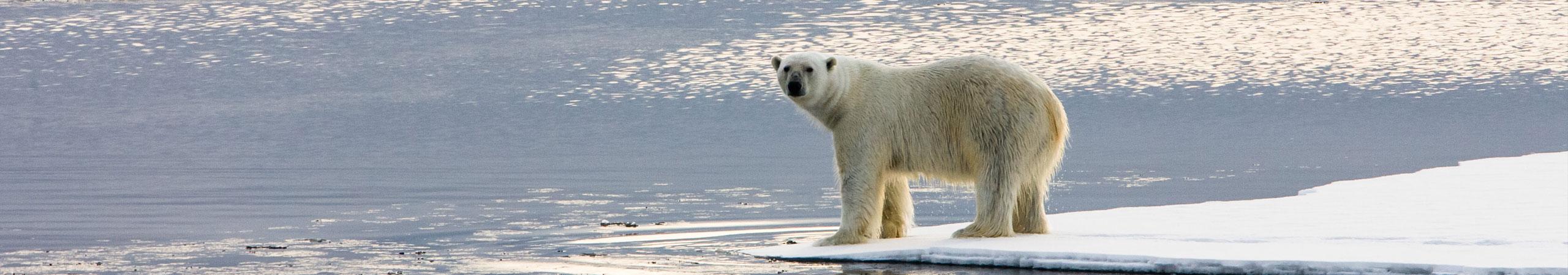 Changements climatiques: des effets à surveiller