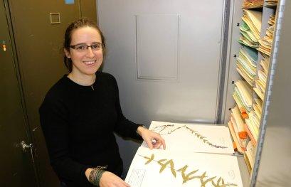 Étudier les effets des insectes herbivores sur une plante envahissante
