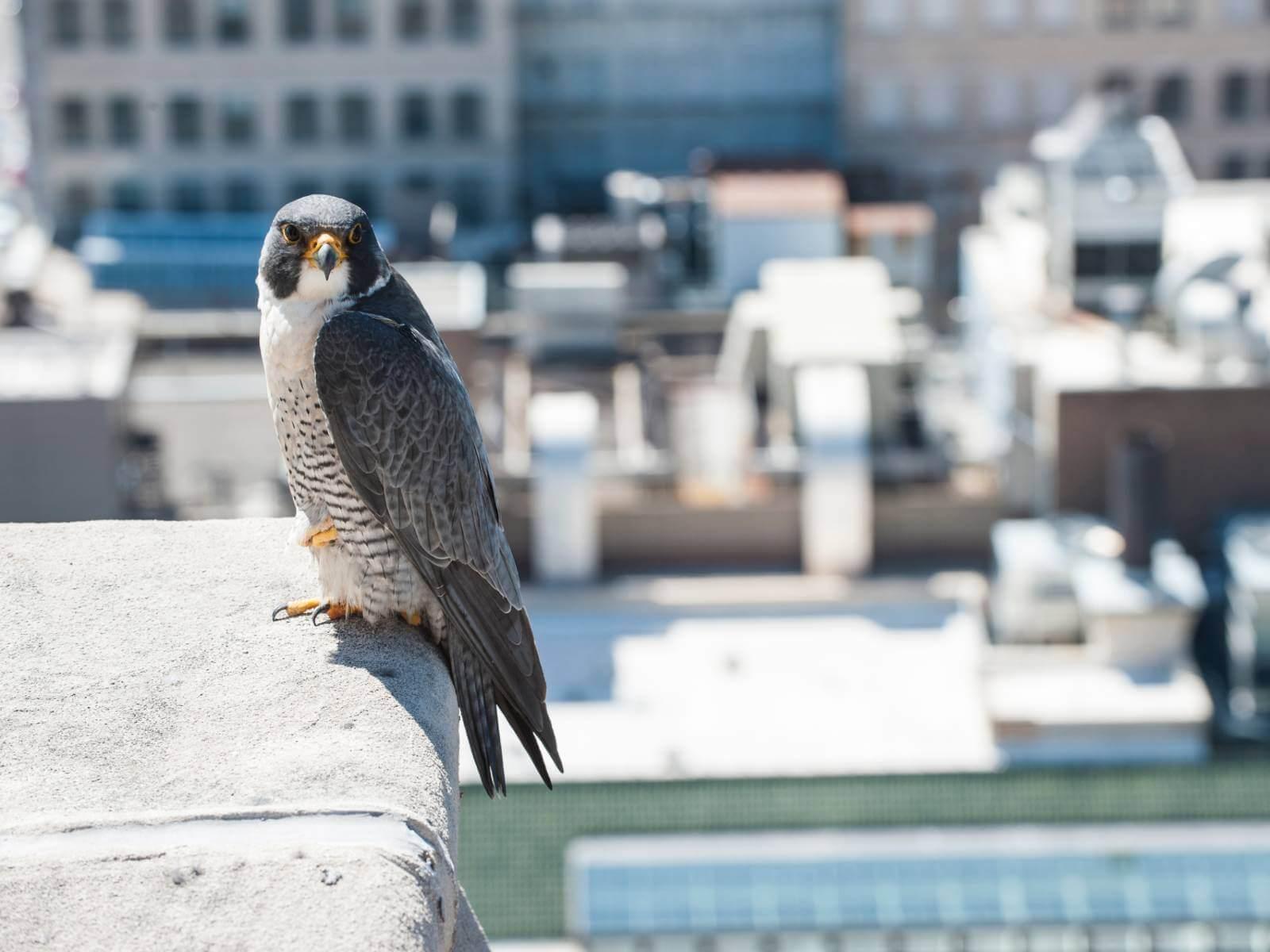 oiseau-villes-silencieuses