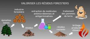 schema-valoriser-residus-forestiers