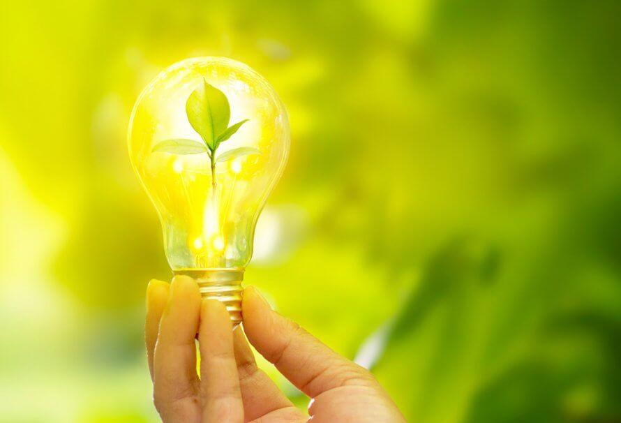 energie-verte-idee-plante