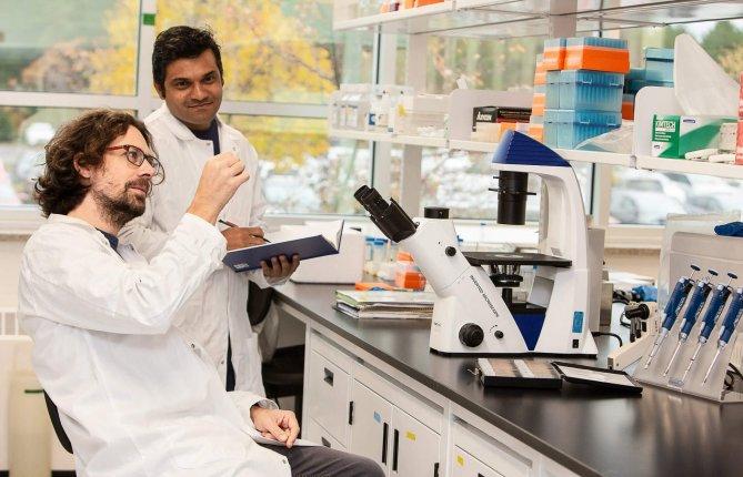 Parkinson: découverte d'un mécanisme de protection contre l'inflammation ciblant les mitochondries extracellulaires