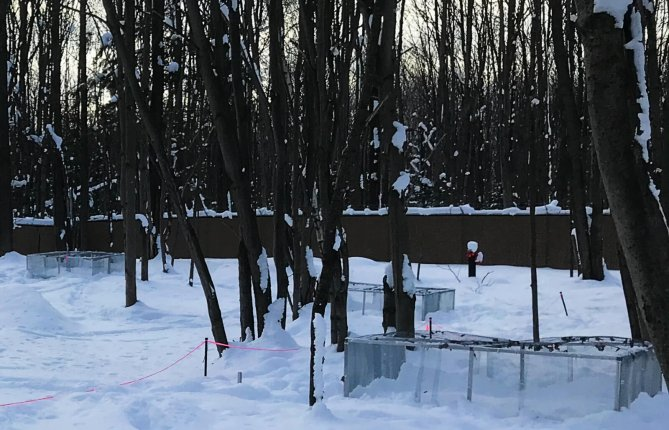 Découverte au site RES[TES]: la décomposition humaine se poursuit pendant l'hiver